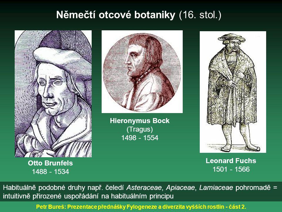 Petr Bureš: Prezentace přednášky Fylogeneze a diverzita vyšších rostlin - část 2. Otto Brunfels 1488 - 1534 Němečtí otcové botaniky (16. stol.) Hieron