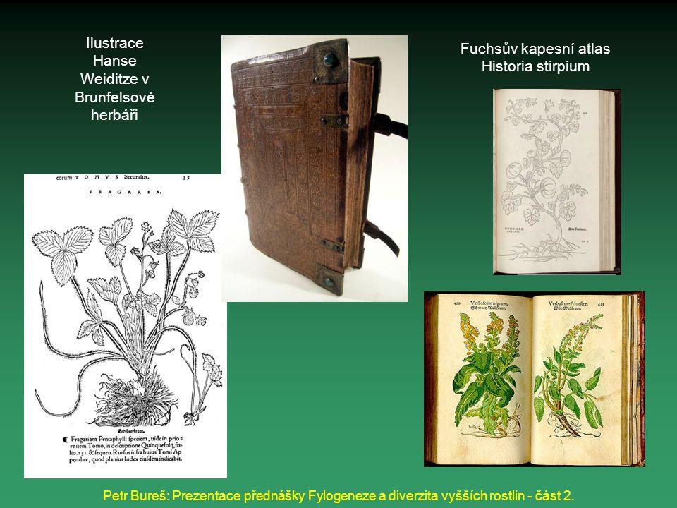 Petr Bureš: Prezentace přednášky Fylogeneze a diverzita vyšších rostlin - část 2. Ilustrace Hanse Weiditze v Brunfelsově herbáři Fuchsův kapesní atlas