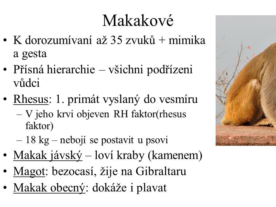 Makakové K dorozumívaní až 35 zvuků + mimika a gesta Přísná hierarchie – všichni podřízeni vůdci Rhesus: 1.