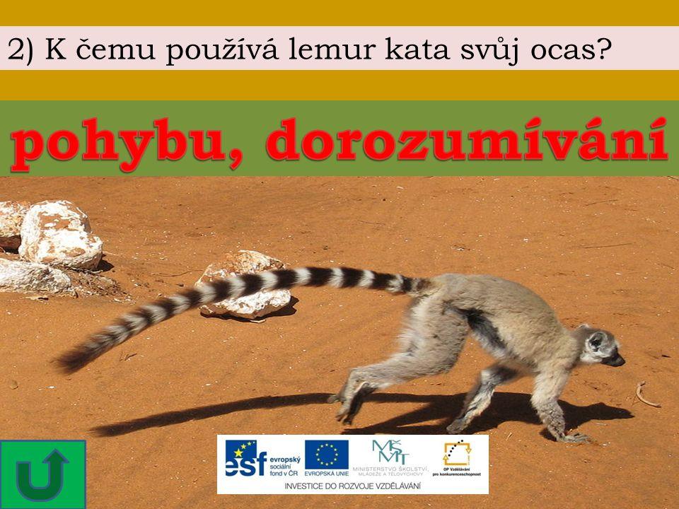 2) K čemu používá lemur kata svůj ocas?