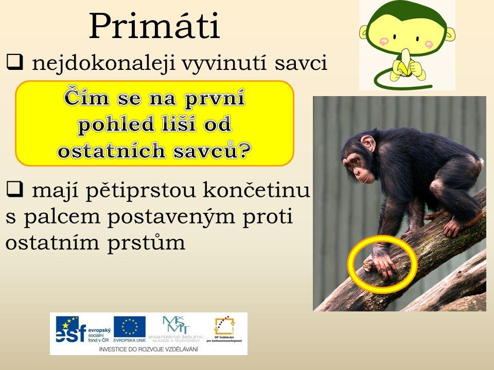 Primáti  přizpůsobili se většinou životu na stromech  do této skupiny patří okolo 200 druhů savců  na prstech mají většinou ploché nehty  mozek je velmi dobře vyvinut  většinou žijí v organizovaných skupinách