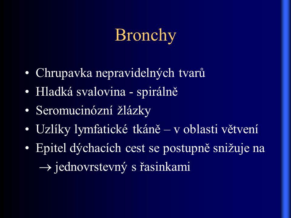 Bronchy Chrupavka nepravidelných tvarů Hladká svalovina - spirálně Seromucinózní žlázky Uzlíky lymfatické tkáně – v oblasti větvení Epitel dýchacích c