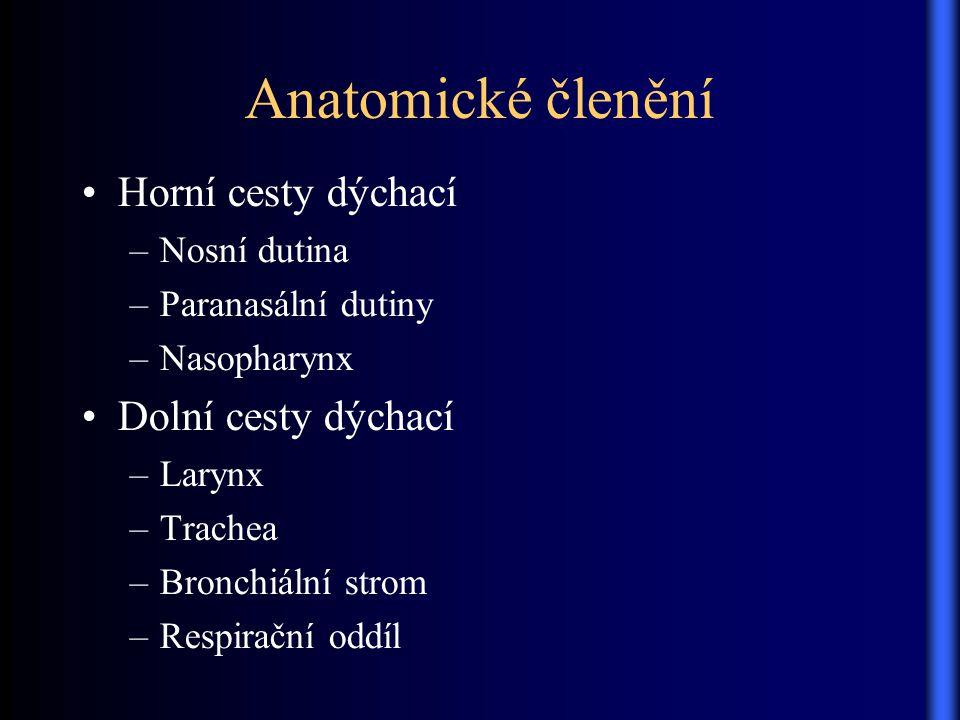 Anatomické členění Horní cesty dýchací –Nosní dutina –Paranasální dutiny –Nasopharynx Dolní cesty dýchací –Larynx –Trachea –Bronchiální strom –Respira