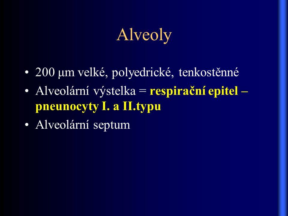 Alveoly 200 μm velké, polyedrické, tenkostěnné Alveolární výstelka = respirační epitel – pneunocyty I. a II.typu Alveolární septum