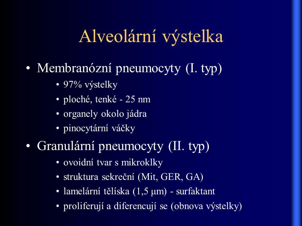 Alveolární výstelka Membranózní pneumocyty (I. typ) 97% výstelky ploché, tenké - 25 nm organely okolo jádra pinocytární váčky Granulární pneumocyty (I