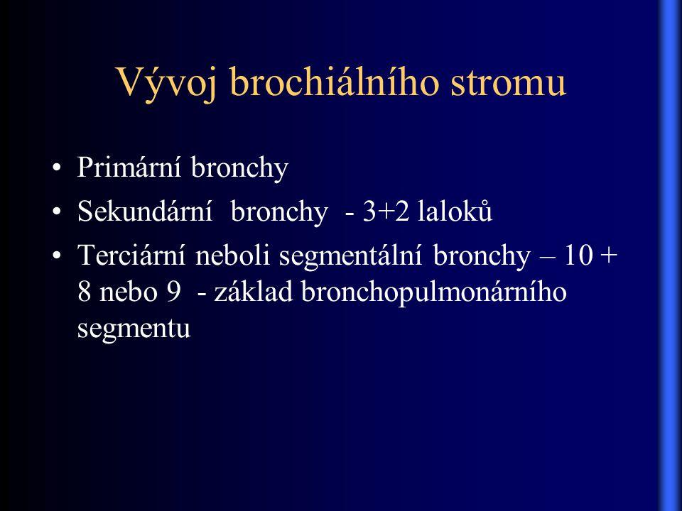 Vývoj brochiálního stromu Primární bronchy Sekundární bronchy - 3+2 laloků Terciární neboli segmentální bronchy – 10 + 8 nebo 9 - základ bronchopulmon