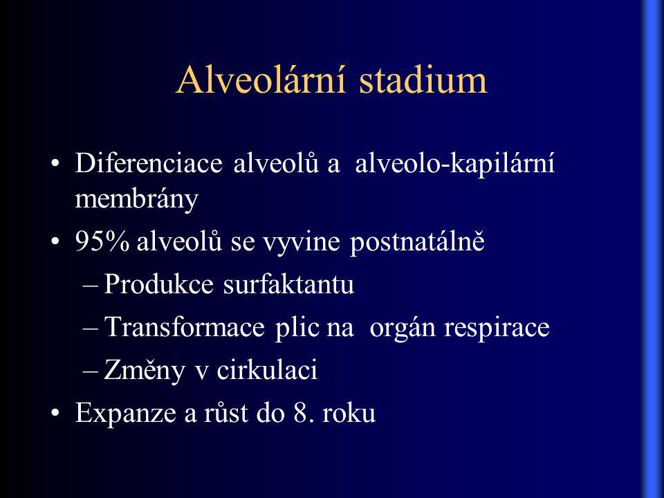 Alveolární stadium Diferenciace alveolů a alveolo-kapilární membrány 95% alveolů se vyvine postnatálně –Produkce surfaktantu –Transformace plic na org