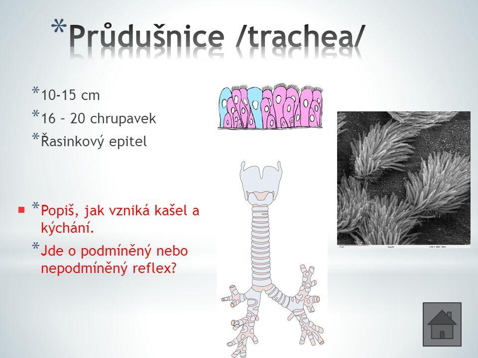 * 10-15 cm * 16 – 20 chrupavek * Řasinkový epitel * Popiš, jak vzniká kašel a kýchání.