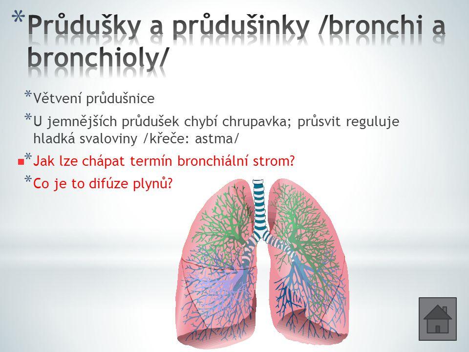 * Větvení průdušnice * U jemnějších průdušek chybí chrupavka; průsvit reguluje hladká svaloviny /křeče: astma/ * Jak lze chápat termín bronchiální strom.
