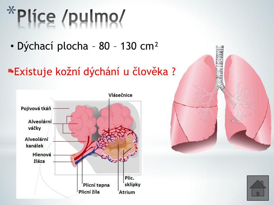 Dýchací plocha – 80 – 130 cm² Existuje kožní dýchání u člověka ?