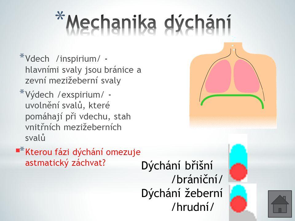 * Vdech /inspirium/ - hlavními svaly jsou bránice a zevní mezižeberní svaly * Výdech /exspirium/ - uvolnění svalů, které pomáhají při vdechu, stah vnitřních mezižeberních svalů * Kterou fázi dýchání omezuje astmatický záchvat.