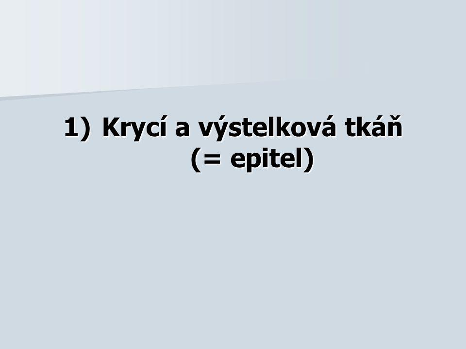 1)Krycí a výstelková tkáň (= epitel)