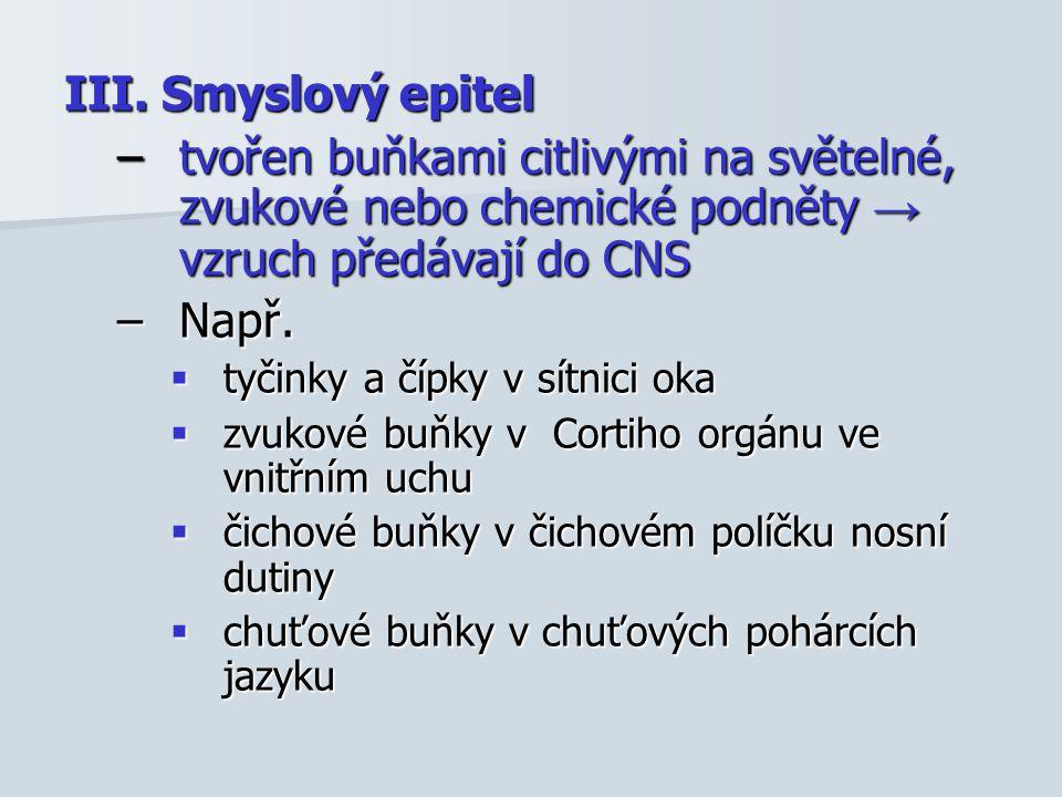 III. Smyslový epitel –tvořen buňkami citlivými na světelné, zvukové nebo chemické podněty → vzruch předávají do CNS –Např.  tyčinky a čípky v sítnici