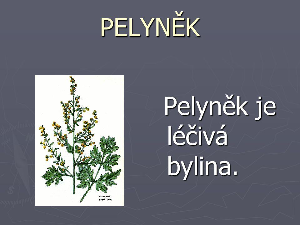 PELYNĚK Pelyněk je léčivá bylina.