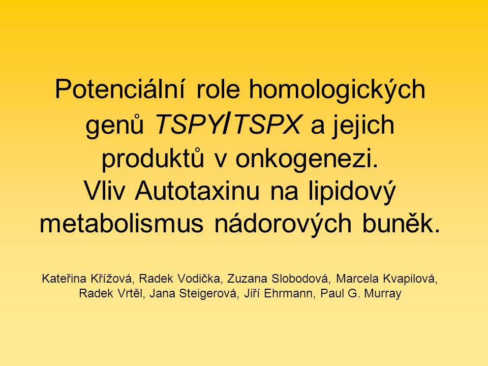 TSPX homolog TSPY na chromozomu X, nemá multikopiový charakter 6,1 kb, protein 693 AK 79 kDa oproti TSPY přítomnost Pr domény a kyselé C-terminální části čtyři NLSs v N-terminální části, dvě fosforylační místa pro CDKs kritická pro inhibiční kapacitu proteinu široká tkáňová exprese, především v mozku, varlatech a vaječnících Převzato: Chai a kol., 2001