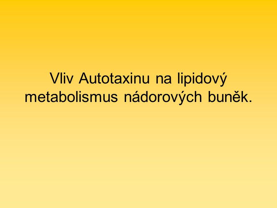 Vliv Autotaxinu na lipidový metabolismus nádorových buněk.