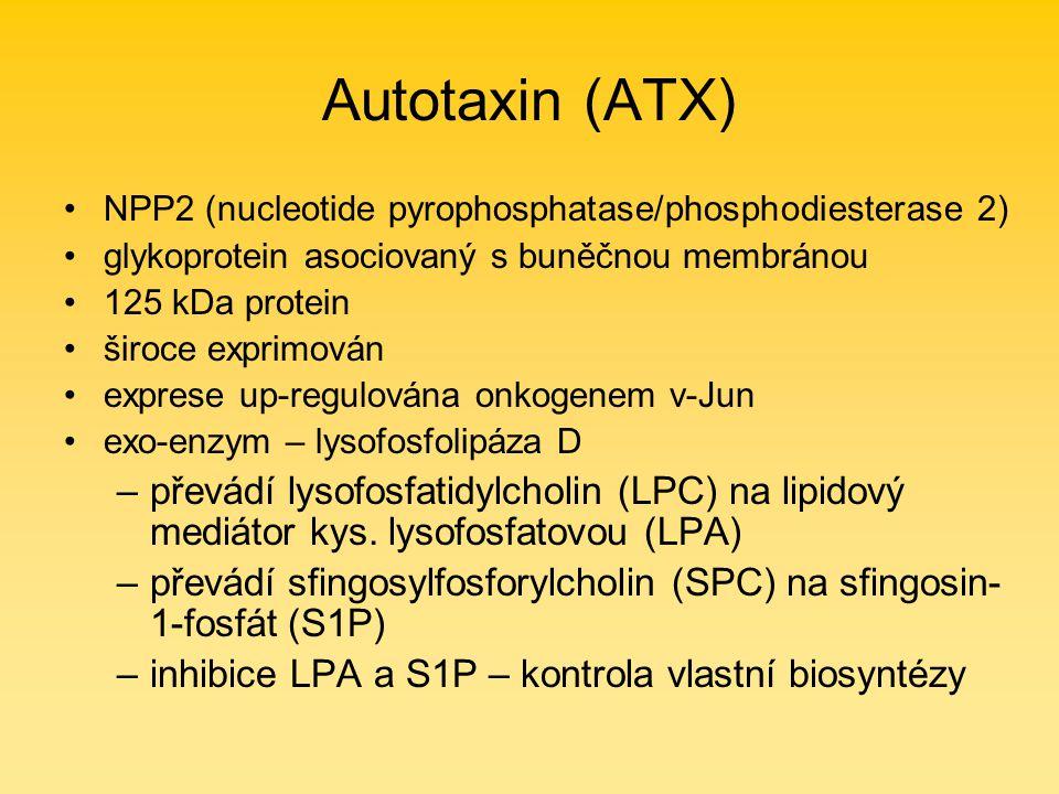 Autotaxin (ATX) NPP2 (nucleotide pyrophosphatase/phosphodiesterase 2) glykoprotein asociovaný s buněčnou membránou 125 kDa protein široce exprimován exprese up-regulována onkogenem v-Jun exo-enzym – lysofosfolipáza D –převádí lysofosfatidylcholin (LPC) na lipidový mediátor kys.