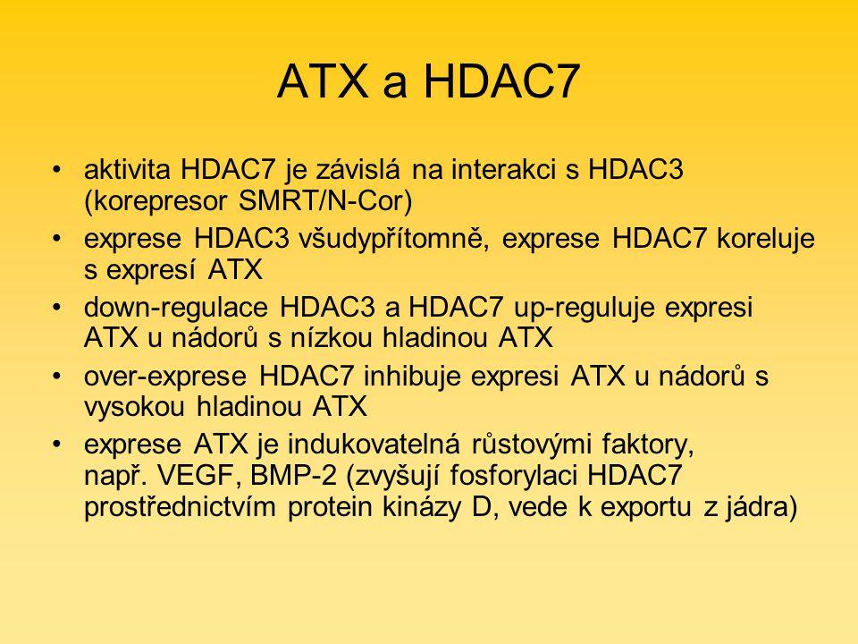 ATX a HDAC7 aktivita HDAC7 je závislá na interakci s HDAC3 (korepresor SMRT/N-Cor) exprese HDAC3 všudypřítomně, exprese HDAC7 koreluje s expresí ATX down-regulace HDAC3 a HDAC7 up-reguluje expresi ATX u nádorů s nízkou hladinou ATX over-exprese HDAC7 inhibuje expresi ATX u nádorů s vysokou hladinou ATX exprese ATX je indukovatelná růstovými faktory, např.