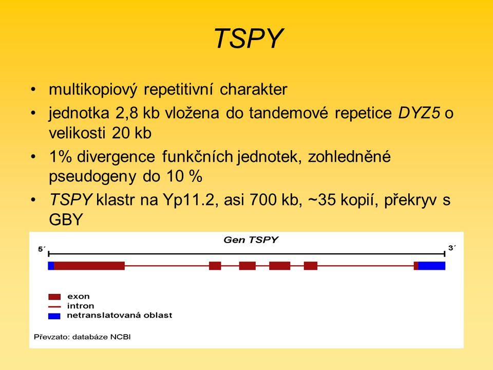 TSPY multikopiový repetitivní charakter jednotka 2,8 kb vložena do tandemové repetice DYZ5 o velikosti 20 kb 1% divergence funkčních jednotek, zohledněné pseudogeny do 10 % TSPY klastr na Yp11.2, asi 700 kb, ~35 kopií, překryv s GBY