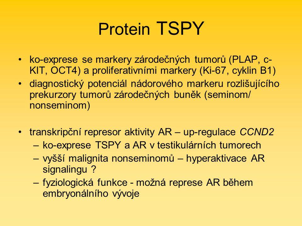 Protein TSPY ko-exprese se markery zárodečných tumorů (PLAP, c- KIT, OCT4) a proliferativními markery (Ki-67, cyklin B1) diagnostický potenciál nádorového markeru rozlišujícího prekurzory tumorů zárodečných buněk (seminom/ nonseminom) transkripční represor aktivity AR – up-regulace CCND2 –ko-exprese TSPY a AR v testikulárních tumorech –vyšší malignita nonseminomů – hyperaktivace AR signalingu .