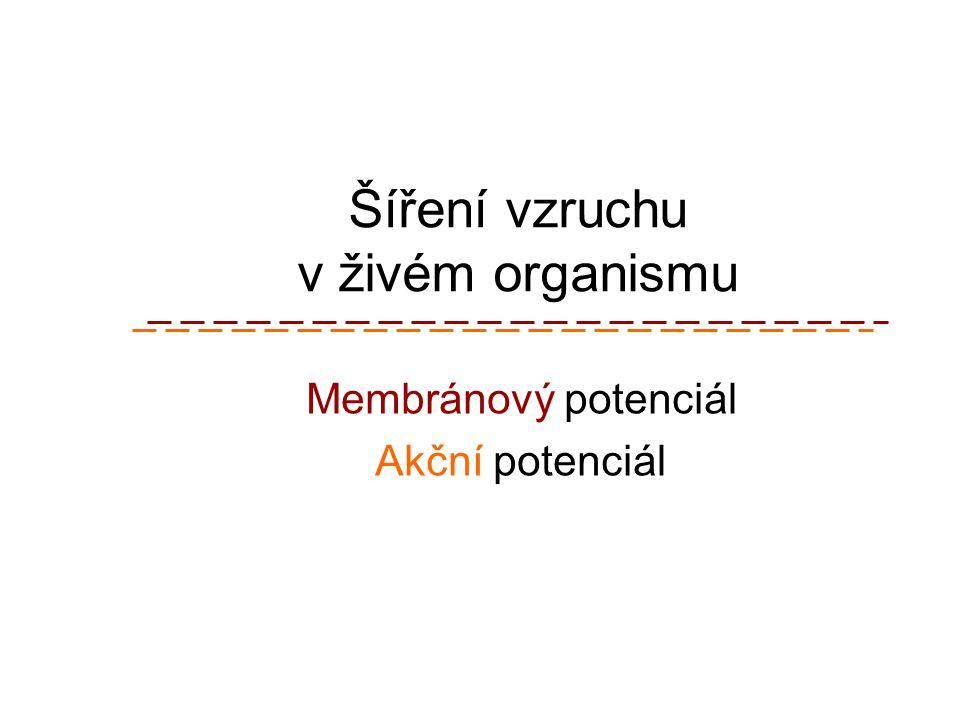 Šíření vzruchu v živém organismu Membránový potenciál Akční potenciál