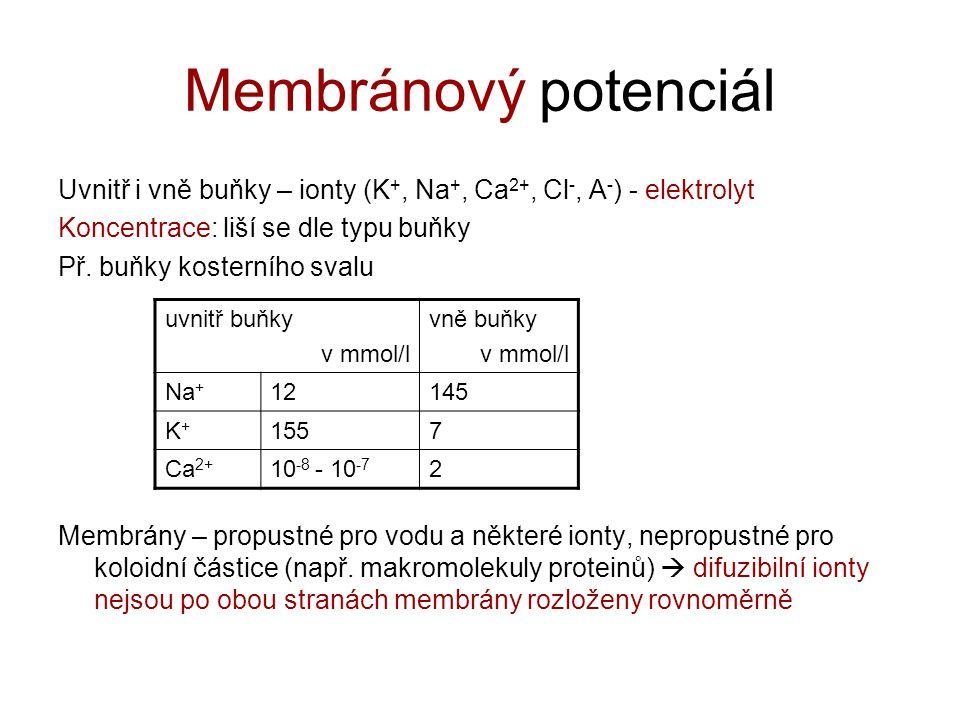 Membránový potenciál Uvnitř i vně buňky – ionty (K +, Na +, Ca 2+, Cl -, A - ) - elektrolyt Koncentrace: liší se dle typu buňky Př. buňky kosterního s
