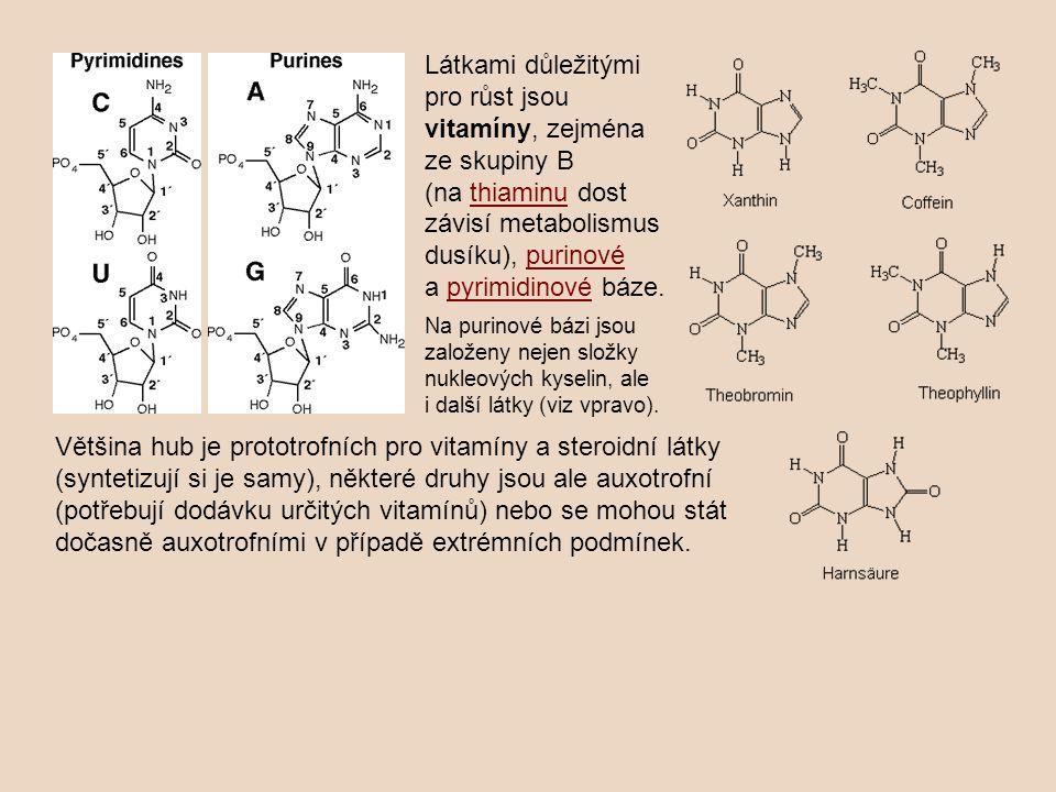 Látkami důležitými pro růst jsou vitamíny, zejména ze skupiny B (na thiaminu dost závisí metabolismus dusíku), purinové a pyrimidinové báze.thiaminupu