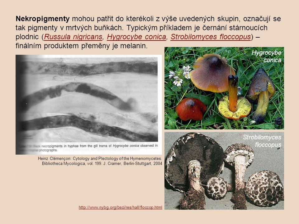 Nekropigmenty mohou patřit do kterékoli z výše uvedených skupin, označují se tak pigmenty v mrtvých buňkách. Typickým příkladem je černání stárnoucích