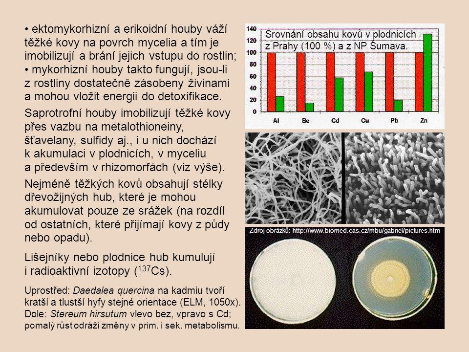 ektomykorhizní a erikoidní houby váží těžké kovy na povrch mycelia a tím je imobilizují a brání jejich vstupu do rostlin; mykorhizní houby takto fungu