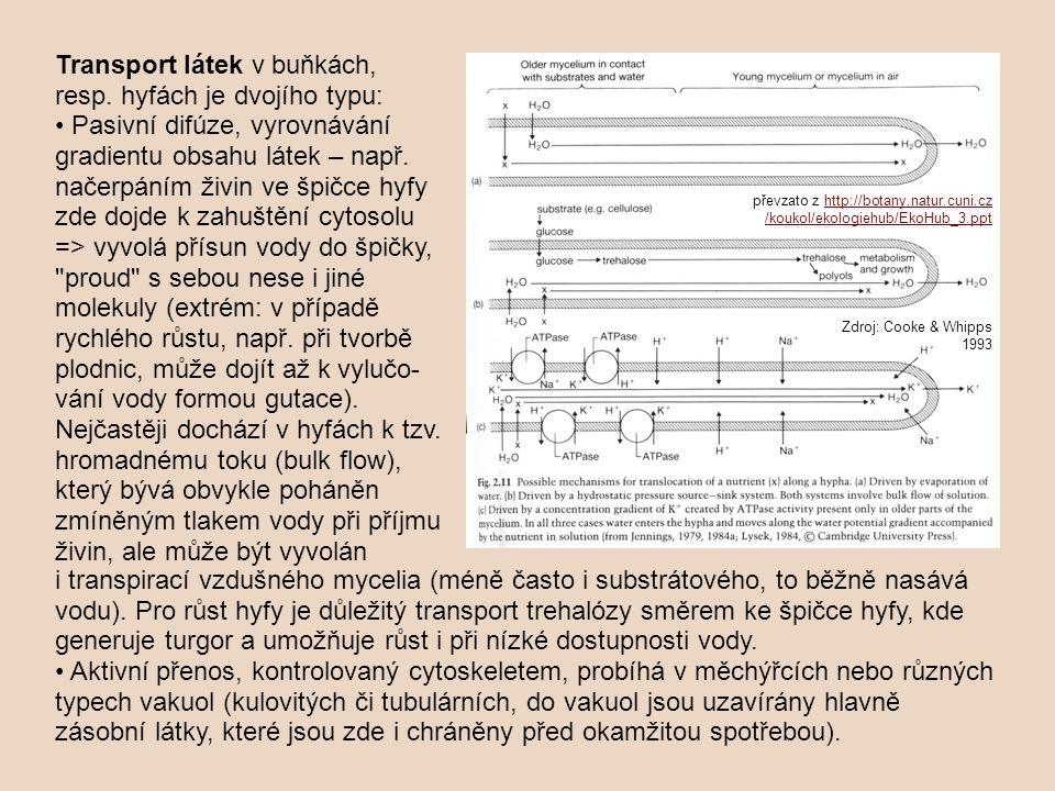 Transport látek v buňkách, resp. hyfách je dvojího typu: Pasivní difúze, vyrovnávání gradientu obsahu látek – např. načerpáním živin ve špičce hyfy zd