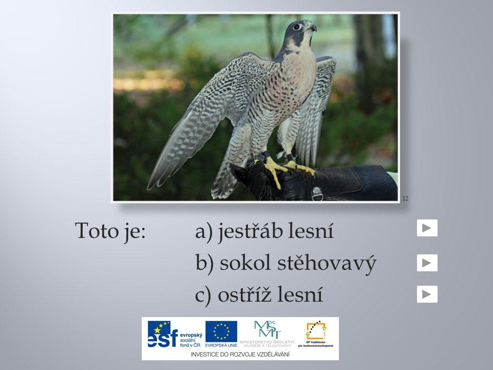 Toto je:a) jestřáb lesní b) sokol stěhovavý c) ostříž lesní 12