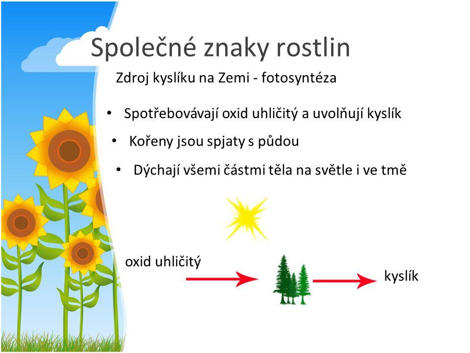 Společné znaky rostlin Zdroj kyslíku na Zemi - fotosyntéza Spotřebovávají oxid uhličitý a uvolňují kyslík Kořeny jsou spjaty s půdou Dýchají všemi čás