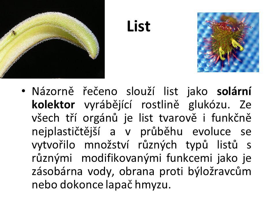 List Názorně řečeno slouží list jako solární kolektor vyrábějící rostlině glukózu. Ze všech tří orgánů je list tvarově i funkčně nejplastičtější a v p