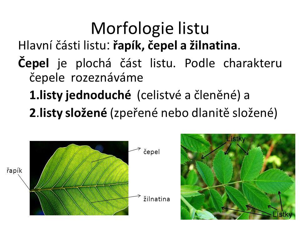 Morfologie listu Hlavní části listu : řapík, čepel a žilnatina. Čepel je plochá část listu. Podle charakteru čepele rozeznáváme 1.listy jednoduché (ce