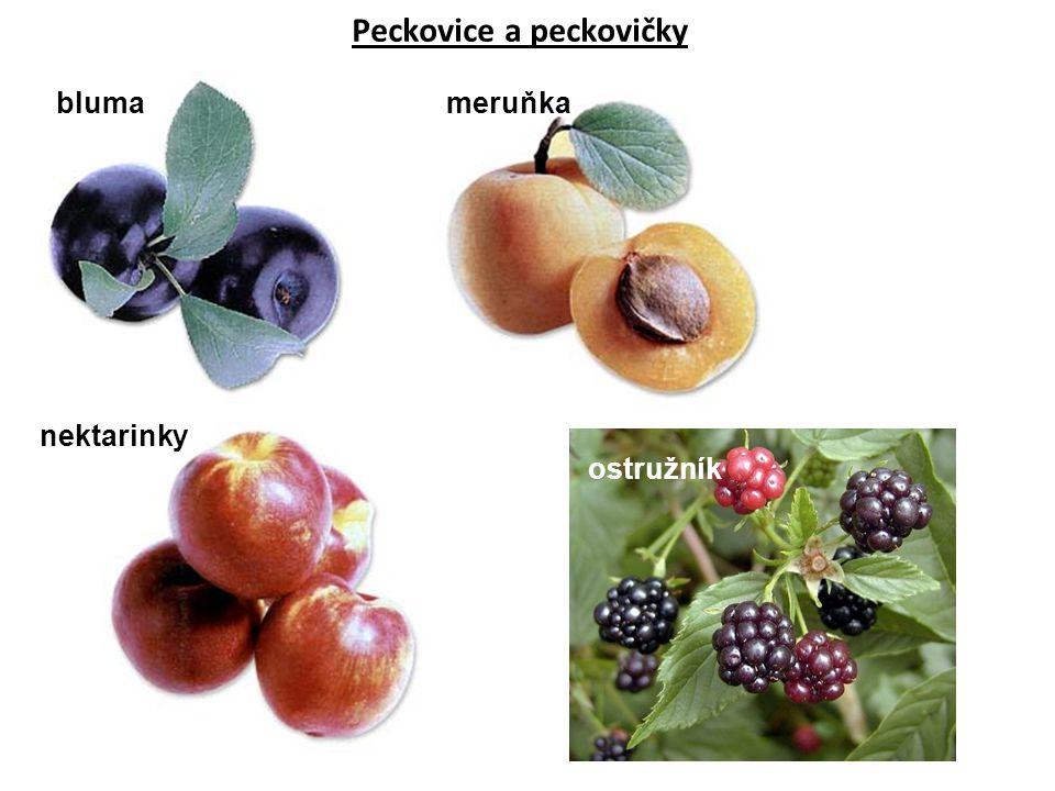 Peckovice a peckovičky blumameruňka nektarinky ostružník