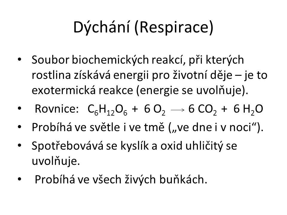 Dýchání (Respirace) Soubor biochemických reakcí, při kterých rostlina získává energii pro životní děje – je to exotermická reakce (energie se uvolňuje