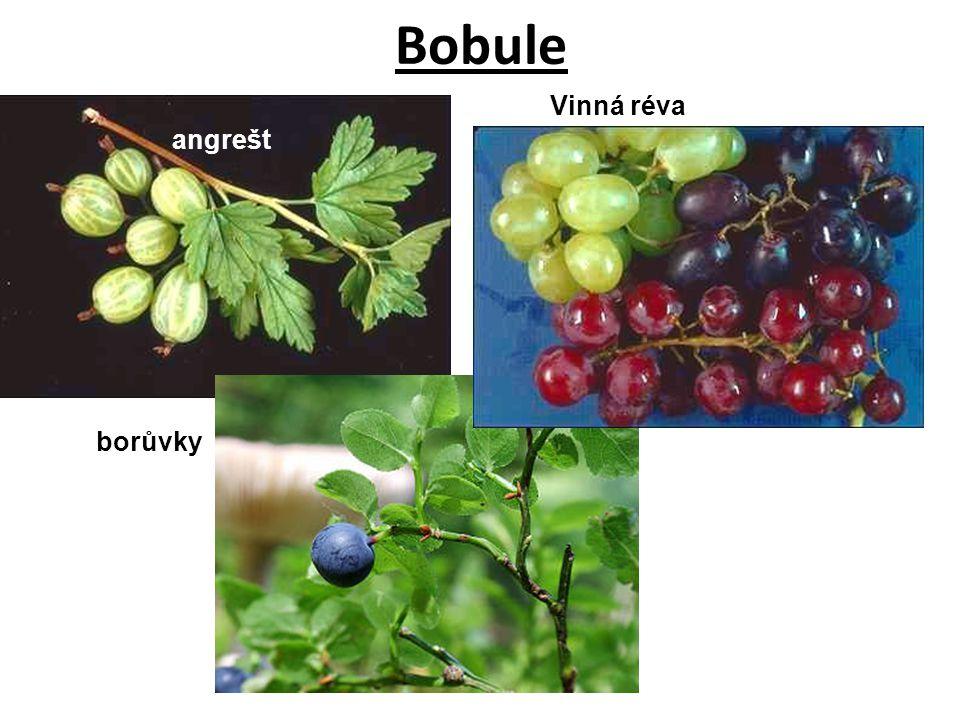Bobule angrešt Vinná réva borůvky