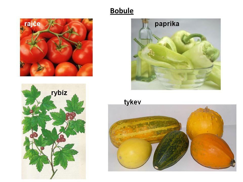 rajčepaprika tykev rybíz Bobule