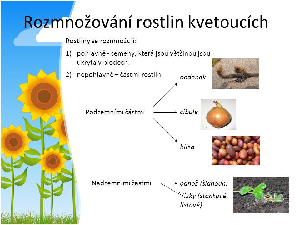 N2 Rozmnožování rostlin kvetoucích Rostliny se rozmnožují: 1)pohlavně - semeny, která jsou většinou jsou ukryta v plodech. 2)nepohlavně – částmi rostl