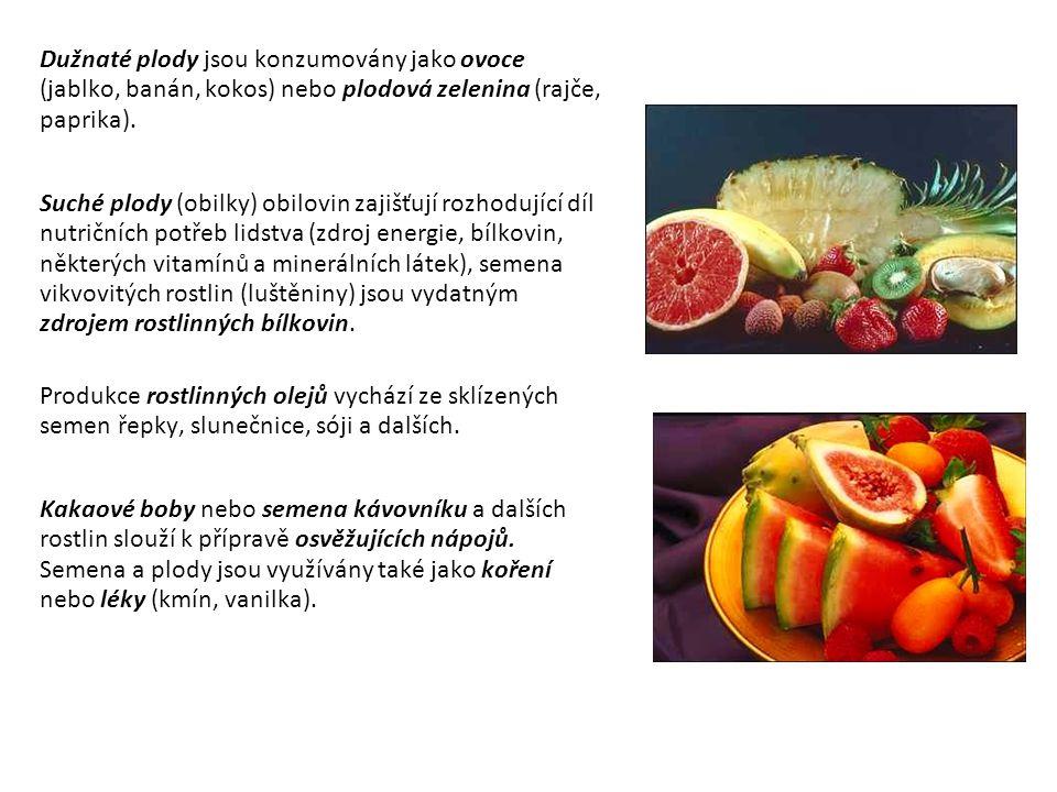 Dužnaté plody jsou konzumovány jako ovoce (jablko, banán, kokos) nebo plodová zelenina (rajče, paprika). Suché plody (obilky) obilovin zajišťují rozho