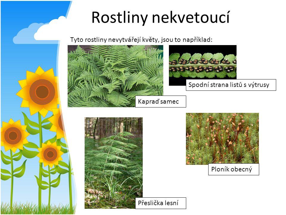 Rostliny nekvetoucí Tyto rostliny nevytvářejí květy, jsou to například: Kapraď samec Spodní strana listů s výtrusy Přeslička lesní Ploník obecný