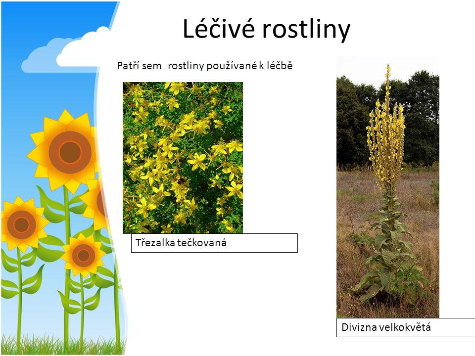 Léčivé rostliny Patří sem rostliny používané k léčbě Třezalka tečkovaná Divizna velkokvětá