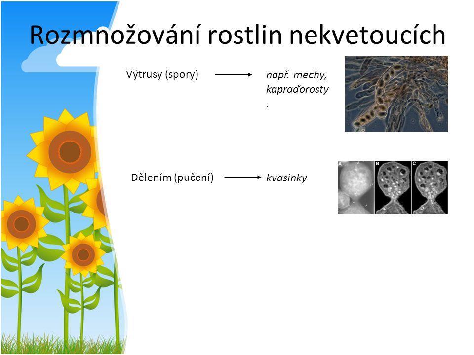 Rozmnožování rostlin nekvetoucích Výtrusy (spory) Dělením (pučení) např. mechy, kapraďorosty. kvasinky