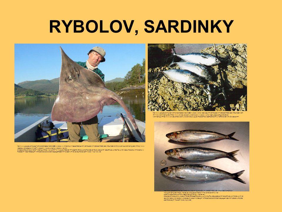RYBOLOV, SARDINKY http://www.google.cz/imgres?q=mo%C5%99sk%C3%BD+rybolov+v+it%C3%A1lii&start=86&um=1&hl=cs&biw=1366&bih=652&tbm=isch&tbnid=4kUiJaN4auk