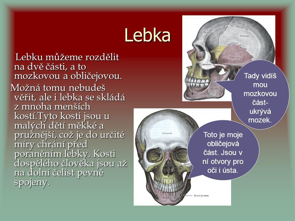 Funkce kostí Opora: kosti tělo podpírají, udržují orgány na svém místě Ochrana: kosti lebky chrání mozek, žebra zase třeba plíce, srdce… Tvorba krve: