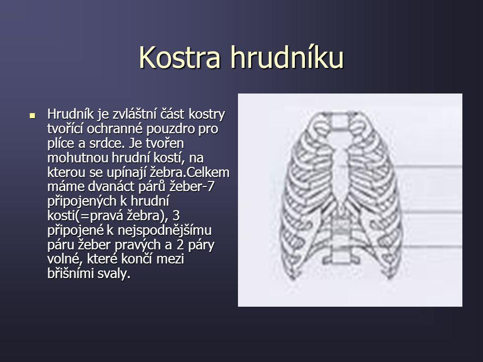 """Kostra hrudníku: PÁTEŘ Páteř je velice složitá a důležitá část lidského těla. Tato """"strunovitá"""" osa našeho těla nese lebku a umožňuje člověku vzpřímen"""