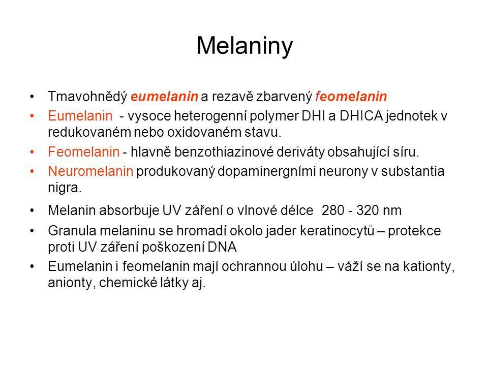 Melaniny Tmavohnědý eumelanin a rezavě zbarvený feomelanin Eumelanin - vysoce heterogenní polymer DHI a DHICA jednotek v redukovaném nebo oxidovaném s