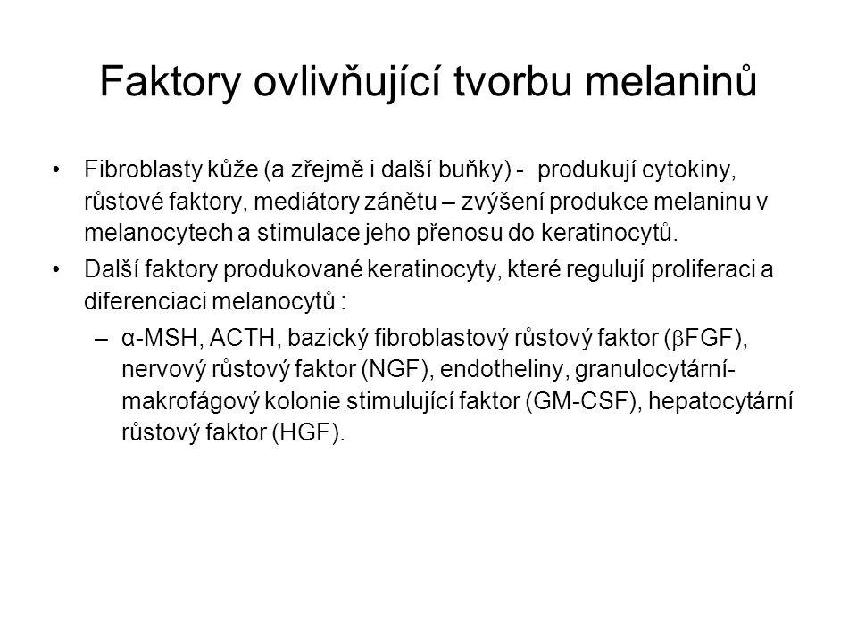 Faktory ovlivňující tvorbu melaninů Fibroblasty kůže (a zřejmě i další buňky) - produkují cytokiny, růstové faktory, mediátory zánětu – zvýšení produk