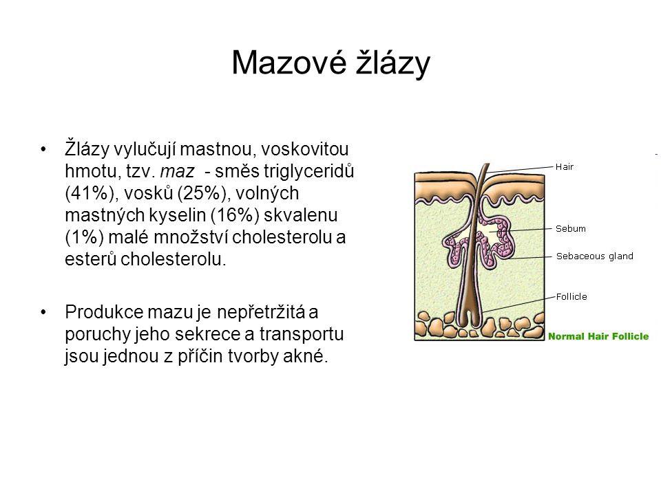 Mazové žlázy Žlázy vylučují mastnou, voskovitou hmotu, tzv. maz - směs triglyceridů (41%), vosků (25%), volných mastných kyselin (16%) skvalenu (1%) m