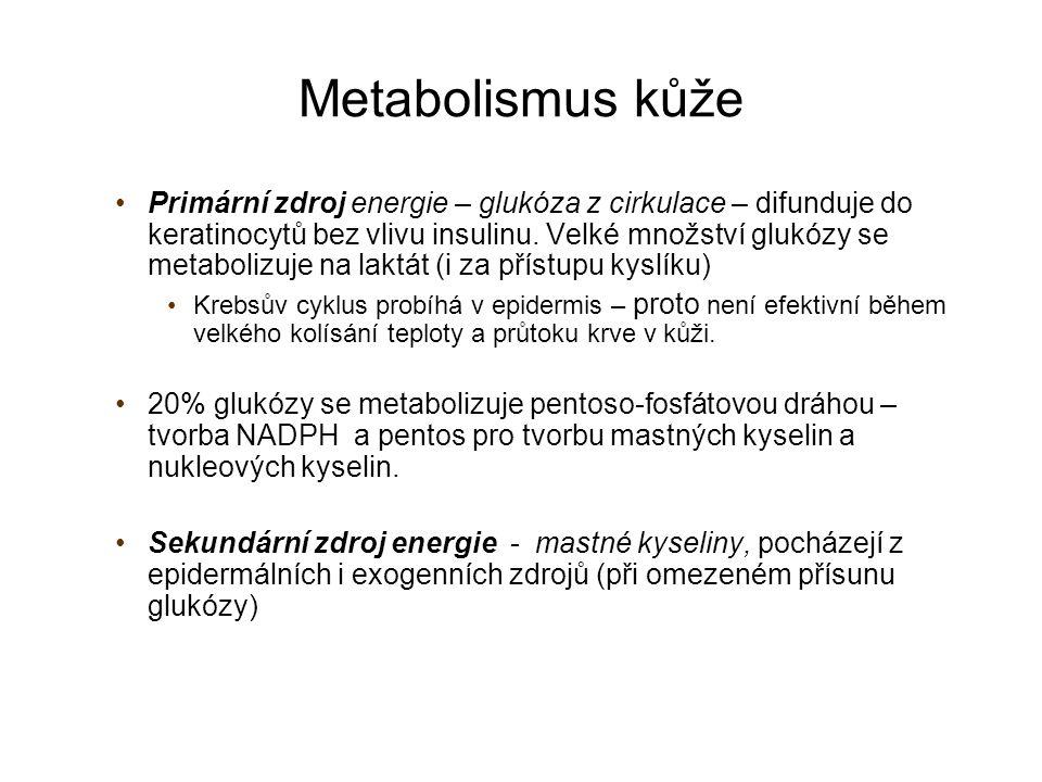 Metabolismus kůže Primární zdroj energie – glukóza z cirkulace – difunduje do keratinocytů bez vlivu insulinu. Velké množství glukózy se metabolizuje